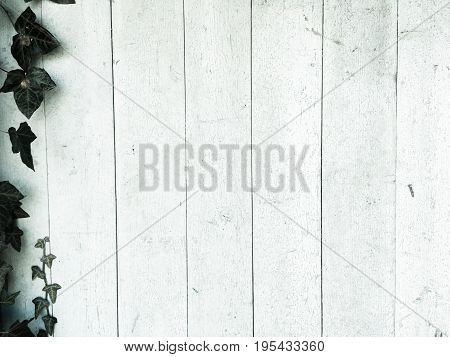 Light wood texture background surface with old natural pattern or old wood texture table top view. Grunge surface with wood texture background. Vintage timber texture background. Rustic table