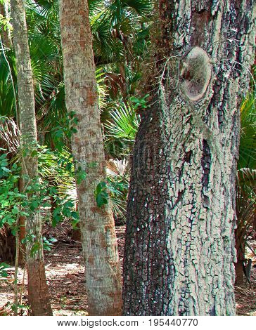 A photo of tree in Myakka River State Park Sarasota Florida that was singed by a fire