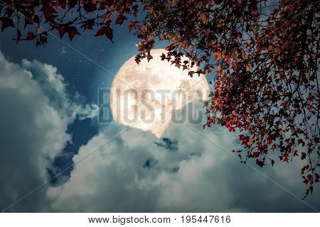 Beautiful autumn fantasy - maple tree in fall season and full moon with cloud star in night skies background. Retro style artwork with vintage color tone
