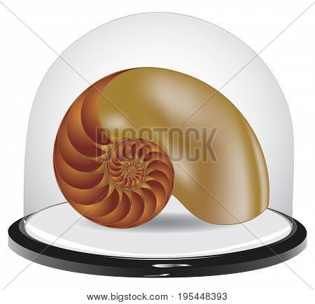 Glass dome with shell for interior decoration
