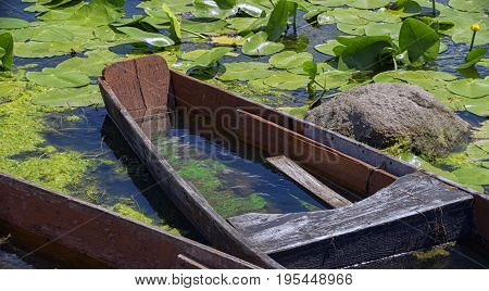 A sunken boat on a river in the leaves of a water lily on a clear sunny afternoon of mid-summer.