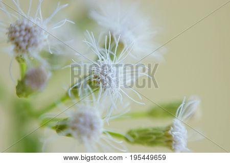 White small flower