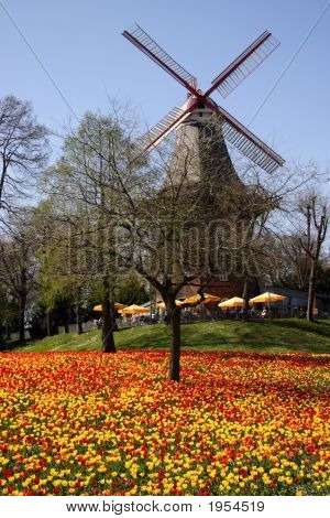 Mill In Tulip Field