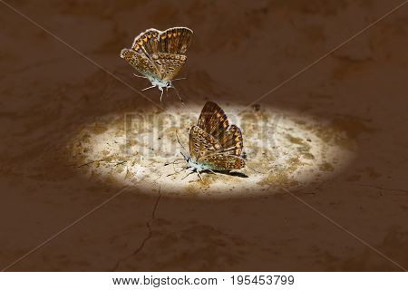 A brown moth to another moth out of the darkness into the circle of light on the ground. The concept of loneliness, love, friendship