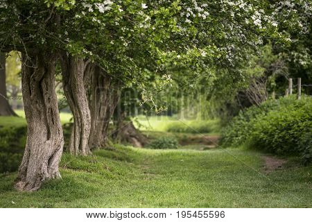 Path Through Lush Shallow Depth Of Field Forest Landscape In English Countryside In Spring