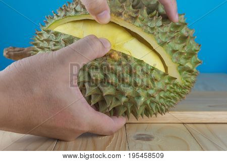 hand hold durian peel to see yellow pulp inside.