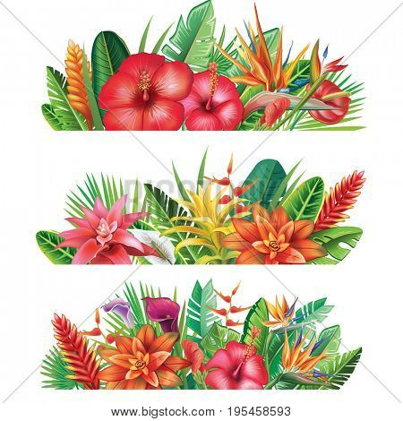 Frame from tropical plants and flowers. Raster version
