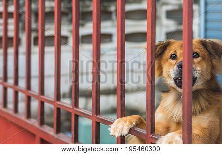 image of brown dog behind teh fence.
