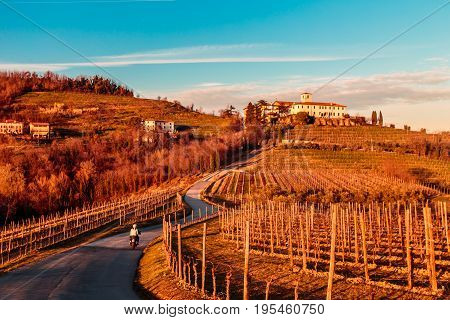 Sunset In The Vineyards Of Rosazzo