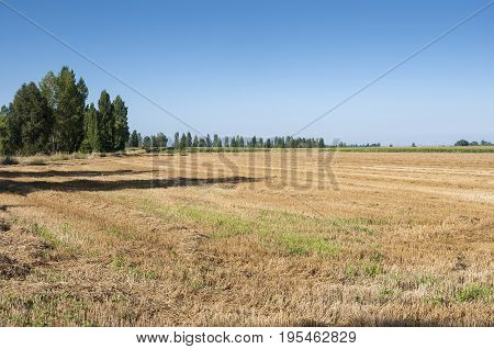 Stubble fields and poplar groves in an irrigated agricultural landscape in the plain of the River Esla, in Leon Province, Spain