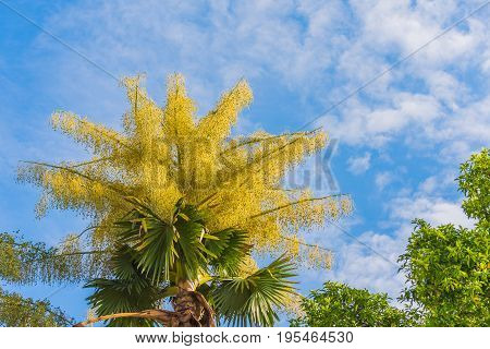 Fan Palm Tree On Day Time.