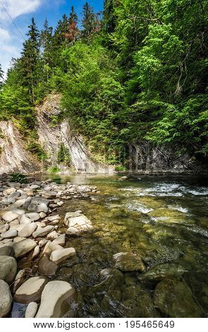 Rapid Flow Of The River In Forest