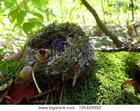 A fallen bird`s nest on a green moss