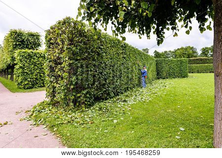 Man is cutting trees in the park. Professional gardener in a uniform cuts bushes with clippers. Pruning garden, hedge. Worker trimming and landscaping green bushes. Hard work in the garden. Clipper.
