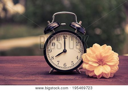 A classic black alarm clock in the garden on the table. A clock on a green natural background. Clock and yellow aster flower on a wooden table. Vintage tinting
