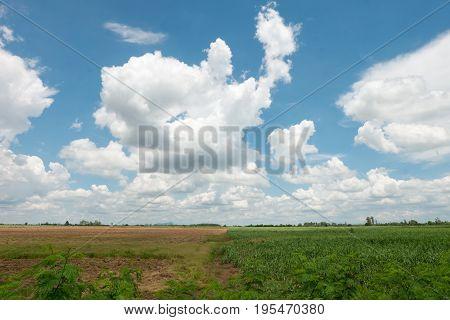 Prepare Sugarcane Field.