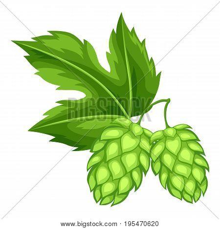 Green hops with leaf. Illustration for Oktoberfest.