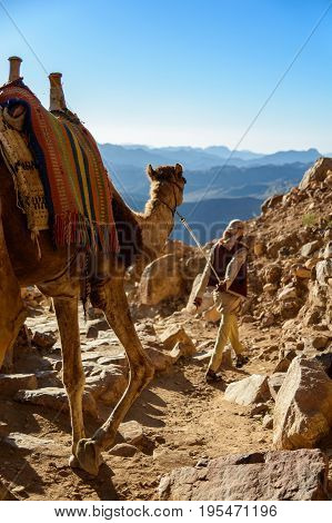Egypt, Sinai, Mount Moses. Road On Which Pilgrims Climb The Mountain Of Moses And Bedouin With Camel