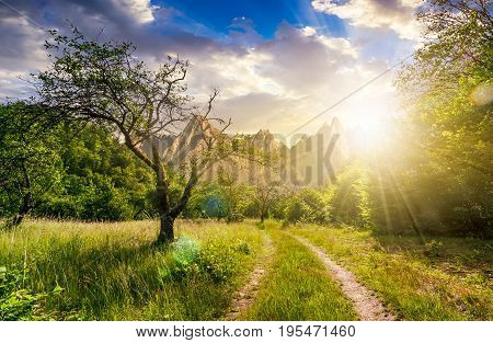 road through the abandoned orchard in mountains. Composite image of High Tatra ridge. beautiful summer landscape at sunset;