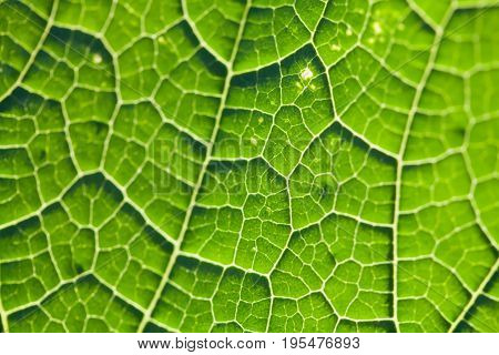 Greenery color leaf texture. natural plant pattern macro view. Selective focus, shallow depth field.