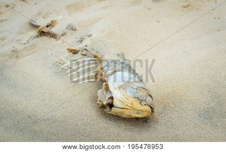 Dead fish on the sand beach. Problem of water pollution