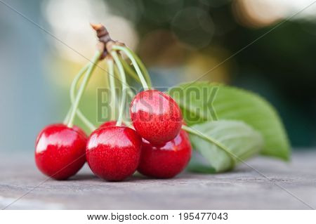 Red cherry berry branch with green leaves. Ripe fruit macro view photo. Selective focus, shallow depth of field. Beautiful bokeh background.
