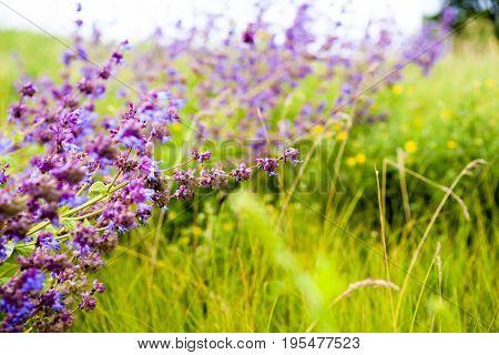 Wildflowers. Wildflower Meadow. Flower Bouquets. Flower And Beautiful Petals