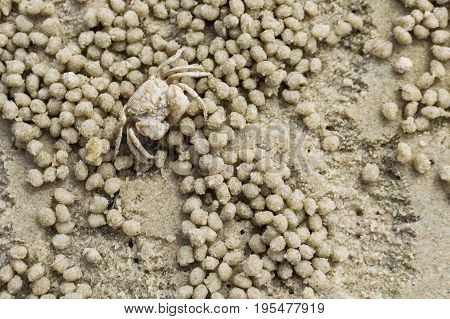 Small ghost crab making sand ball and digging hole in sand beach with twinkle sand background