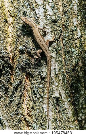 Small brown lizard hanging from the tree
