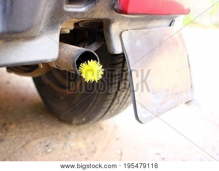 Exhaust pipe for cars with yellow flowers. Conceptual photo of biofuel. Fighting the pollution of the atmosphere by the exhaust gases of engines