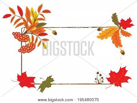 vector autumnal frame with mushrooms ashberry and maple foliage