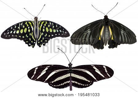 Real butterflies separate on white background - set 05