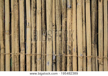 textured background of related bamboo sticks yellow