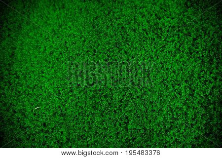 Green fern background, tropical theme, top view