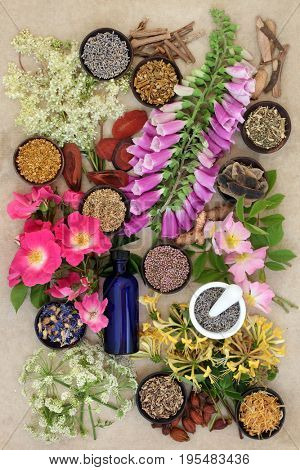 Natural herb and flower collection used in alternative herbal medicine remedies on hemp paper background.