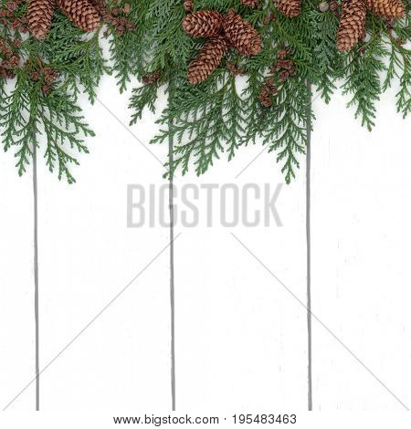 Cedar cypress winter and christmas background border with pine cones on rustic white wood.