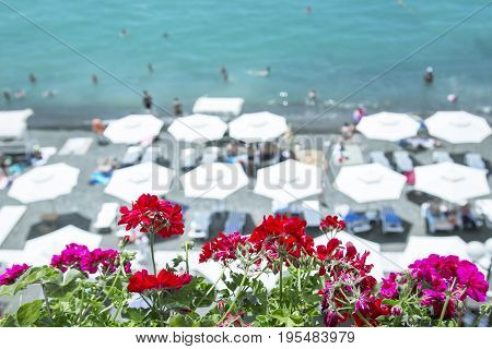 Flowers against the background of beach umbrellas, the sea and sky. In the background, beach umbrellas are not focused. Selected focus. Background in style Vacation and travel Horizontal