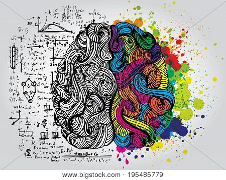 Left and right human brain. Creative half and logic half of human mind. Vector illustration isolated on white background.