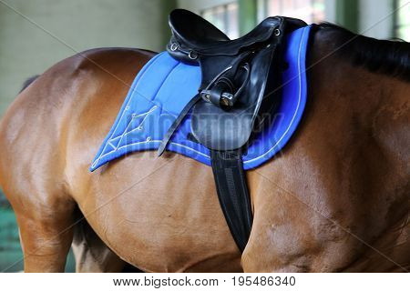 Beautiful new leather saddle on horseback for riders in riding hall