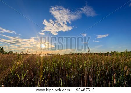 Scenic View Of Beautiful Sunset With Grass.
