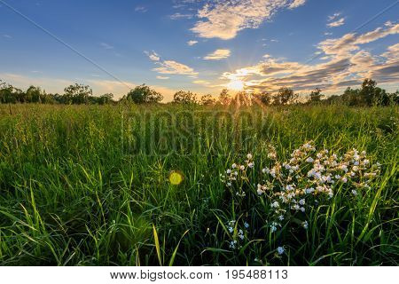 Sunset At Summer Field With Willows, Flowers On Foreground And Grass.
