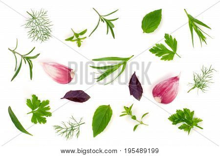 Fresh spices and herbs isolated on white background. Dill parsley basil thyme tarhun garlic. Top view.