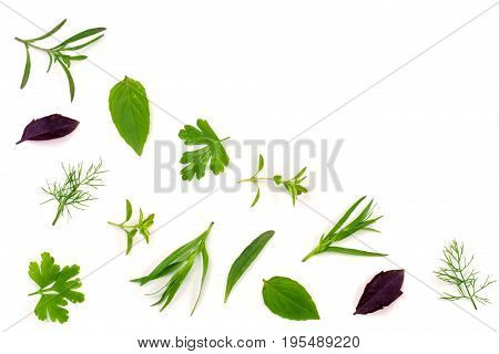 Fresh spices and herbs isolated on white background. Dill parsley basil thyme tarragon. Top view.