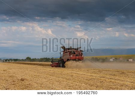 Combine harvester agriculture machine harvesting golden ripe wheat field