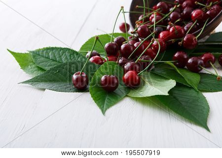 Sweet fresh cherries in bowl with green leaves background. Scattered fruits closeup on white rustic wood table. Healthy food.