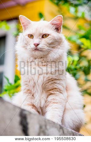 Cat Persian lovely animal and pet in the garden