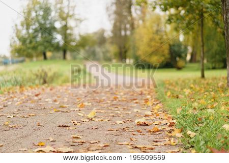 fallen autumn leaves in town park on ground, cloudy morning