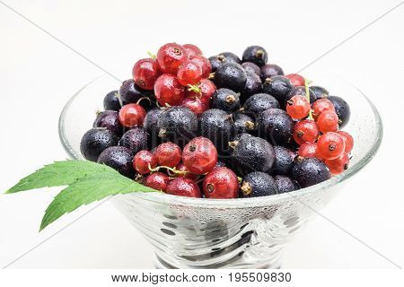 Black and Red wet Currants in glass vase isolated on white background
