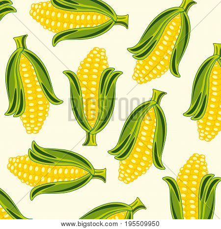 Background from cob of the corn.Vector illustration