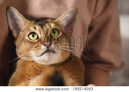 Teen girl with sad abyssinian cat on knees sitting on couch, closeup photo